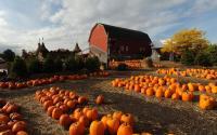 Cobble Creek Farm 1052
