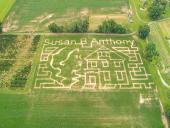 Susan B. Anthony Corn Maze Opens at Stokoe Farms