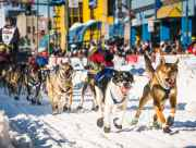 Sled dogs race down Fourth Avenue at the start of the Iditarod.