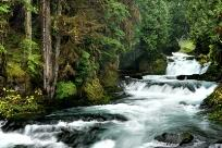 McKenzie River by Tim Giraudier