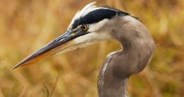 Fairfax County Birding Map