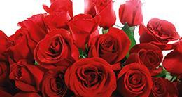 Valentine's Day - Roses - Romance - Seasonal