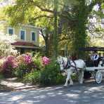 Springbrook Farms Horse Carriage Rides