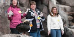 Visitors see a puffin at the Alaska SeaLife Center in Seward