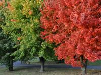 Trees at the Biltmore