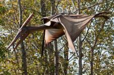 Gallery Pteranodon