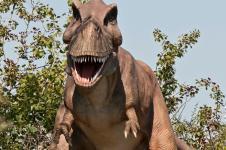 Gallery T. rex