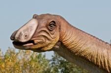 Gallery Hadrosaurus