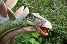 Gallery Stegosaurus