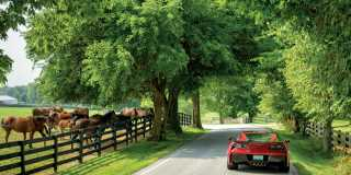 Corvette on Driving Tour in Lexington