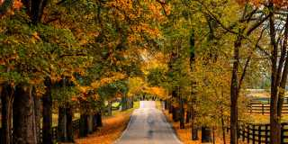 Fall Scenic Drives in Lexington