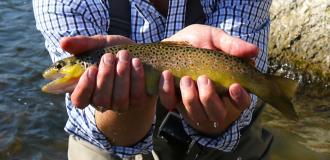 Fly Fishing Blog for Kids