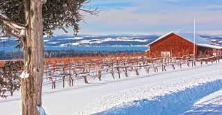 Winter view at Long Point Winery