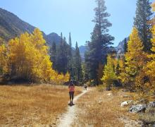 Horse Creek Trail from Twin Lakes, Bridgeport on October 10, 2016 Fall Colors