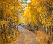 Lundy Lake Road leaves