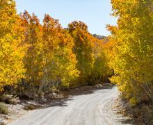 Sagehen Summit Dirt Road