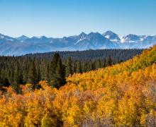Sagehen Summit Fall Colors with mountain views