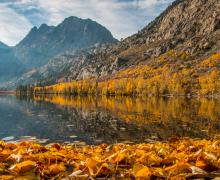 Silver Lake with leaves