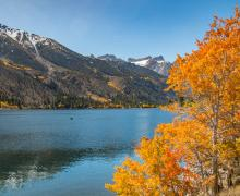 fall color tree twin lakes bridgeport