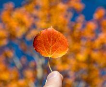 fall color leaf