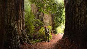 Ranger in the Redwoods