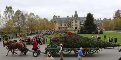 2015 Biltmore Tree Raising