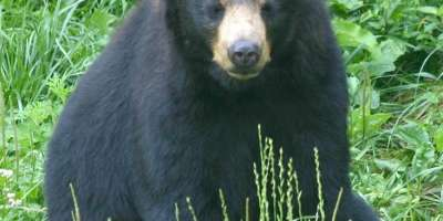 Become Bear Aware: Suvival Tips for Encounters