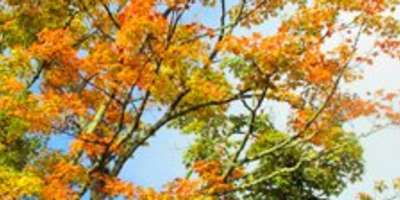 First Signs of Fall Color