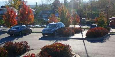 Asheville Fall Color Report for November 5