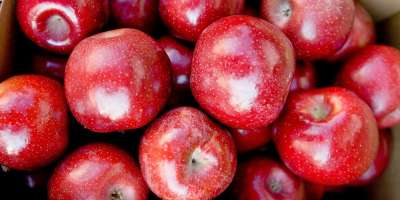 New Cideries Offer Sweet Taste of WNC + Recipe