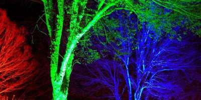 Winter Lights Dazzle the N.C. Arboretum