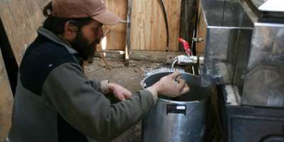 Discover the Magic of Making Maple Syrup