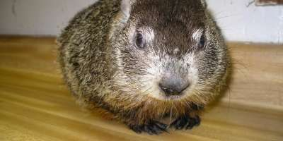 Asheville Celebrates Groundhog's Day