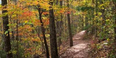Bent Creek Trail at the NC Arboretum