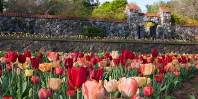 Biltmore Blooms Walled Garden