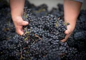 Harvest Wine Tours Napa
