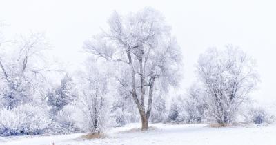 Appreciate Winter