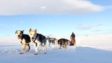 Dog sledding with Geilo Husky in Hardangervidda