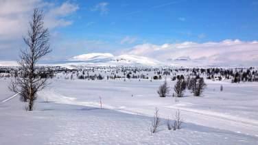 Torpo, Ål in Hallingdal