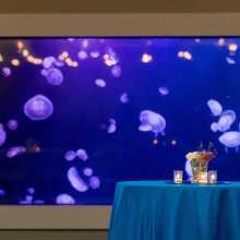 Tennessee Aquarium_Meeting Space 3