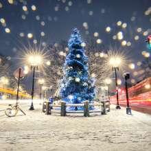 Harvard Holiday Tree