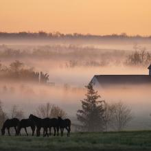 Early Morning Scene in the Bluegrass