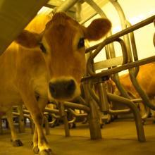 Rockford, Illinois Dairy Farm