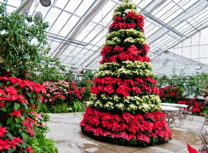 MSU Horticulture Gardens  Holiday Open House