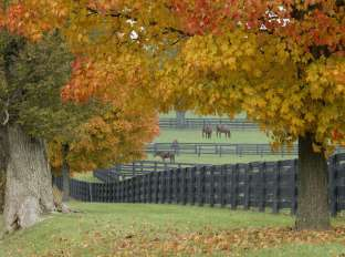Fall in the Bluegrass