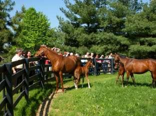 Horse Farm Tour