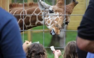 giraffe-small-1024x682
