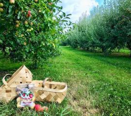 Beasley's Orchard u-pick