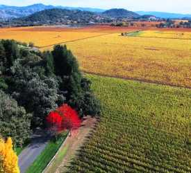 Cabernet Season in the Napa Valley