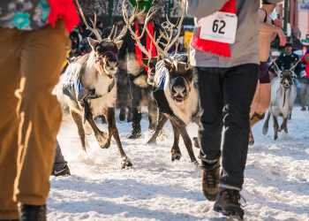 Running of the Reindeer at Anchorage Fur Rendezvous